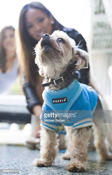 Mary Beth Sales with Busby The Yorkie attends Avalon Hotel Beverly Hills Presents Flirty Thirty Celebrating Mary Beth Sales' 30th Birthday at Avalon...