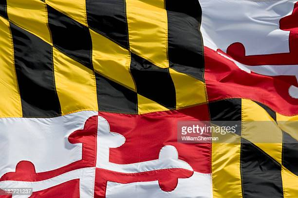 Maryland State Flag Closeup