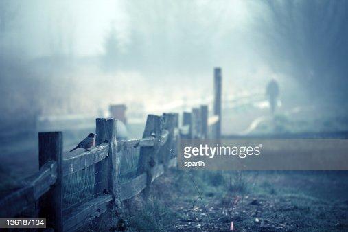 Marymoor Park fog