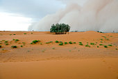 Marzouga Settlement Swallowed by Sandstorm