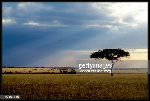 Masai Mara evening sun : Stock Photo
