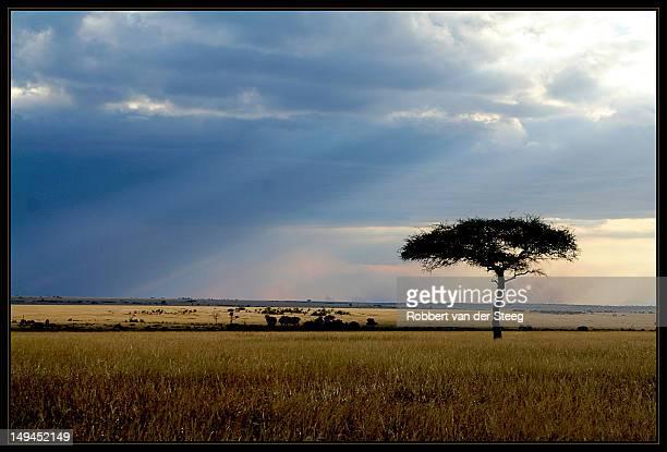 Masai Mara evening sun