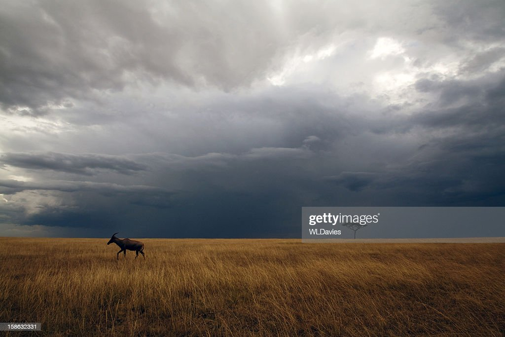 Masai Mara storm : Stock Photo