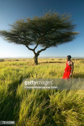 Masai Warrior in red standing near Acacia tree and surveying landscape of Lewa Conservancy, Kenya Africa : Stock Photo