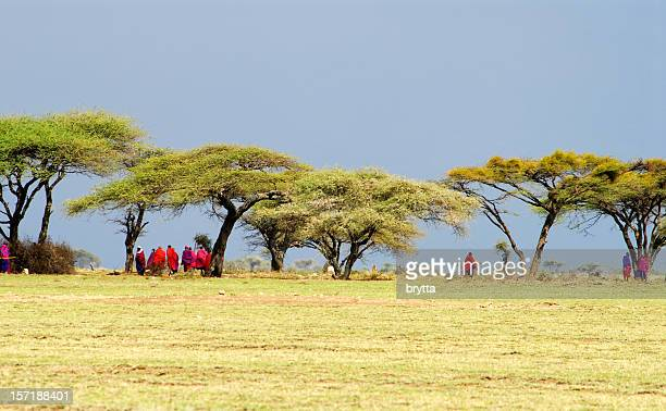 Masai warriors gathering under the acacia trees before a meeting