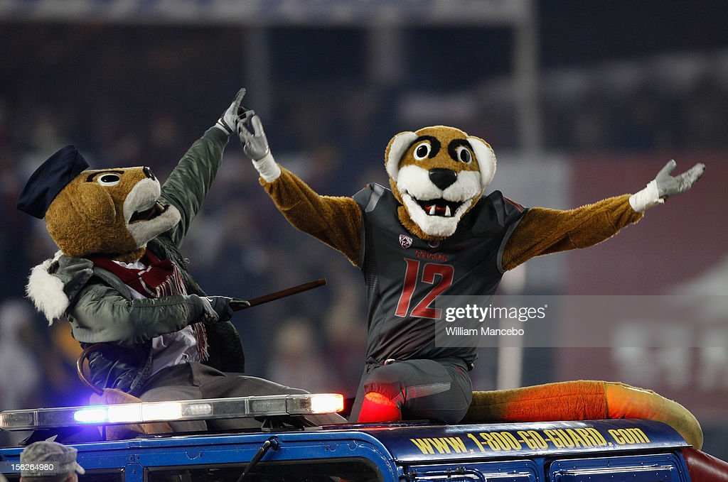 Mascot Butch T. Cougar of the Washington State Cougars takes the field with a cougar friend in a National Guard vehicle before the game against the UCLA Bruins at Martin Stadium on November 10, 2012 in Pullman, Washington.
