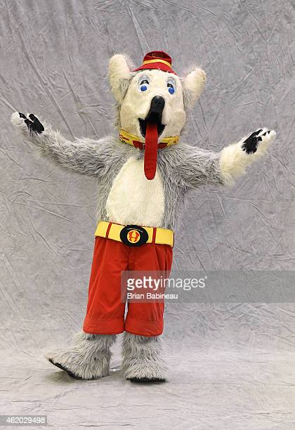 Mascot Harvey the Hound of the Calgary Flames poses for a portrait during the 2015 NHL AllStar Weekend Mascot Portrait session at Columbus Convention...