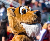 The head of a cougar mascot with the stands full behind it, at a high school football game on a sunny day in the fall.