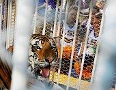 LSU mascot Mike VI a Bengal/Siberian mixed tiger is displayed on the field before the Florida Gators take on the LSU Tigers at Tiger Stadium on...