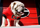 IX mascot of the Georgia Bulldogs looks on during the game against the Missouri Tigers at Sanford Stadium on October 12 2013 in Athens Georgia