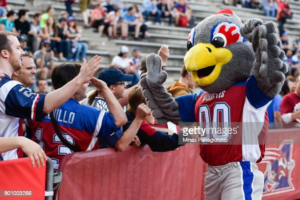 Mascot of the Montreal Alouettes Touche greets fans during the warmup prior to the CFL game against the Saskatchewan Roughriders at Percival Molson...