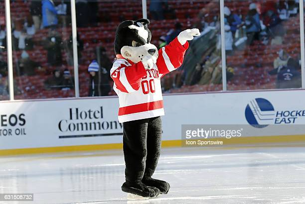 BU mascot Rhett the Boston Terrier on ice before a Frozen Fenway NCAA Men's Division 1 hockey game between the Boston University Terriers and the...
