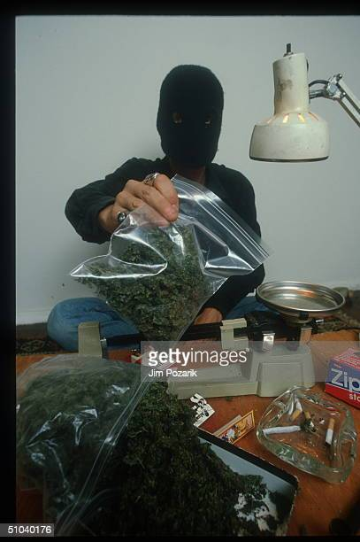 Masked Man Holds A Plastic Bag Of Marijuana In The USA Marijuana Is A Mixture Of Leaves Stems And Flowering Tops Of The Indian Hemp Plant Cannabis...