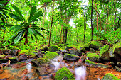 Beautiful HDR view of a stream in the rainforest jungle of the Masoala National Park in Madagascar, a UNESCO world heritage site.