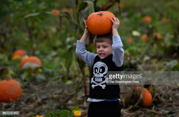 Mason Reynolds shows off his strength by lifting a pumpkin that was added to a wheelbarrow that he and his mom were loading Today's weather was very...