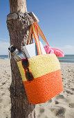 USA, Massachusetts, Nantucket, Bag hanging on tree trunk at sandy beach