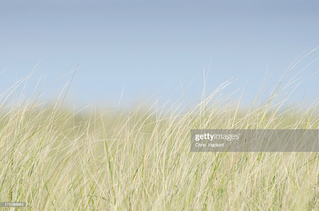 USA, Massachusetts, Nantucket, Dune Grass on empty sky