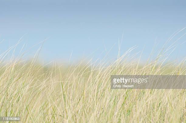 USA, Massachusetts, Nantucket, Dune Grass on empty sky