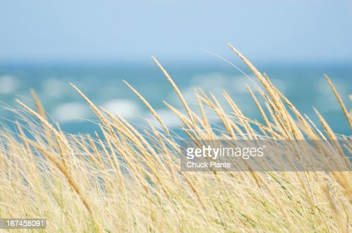 Usa massachusetts nantucket island tall grass with sea in for Nantucket by the sea