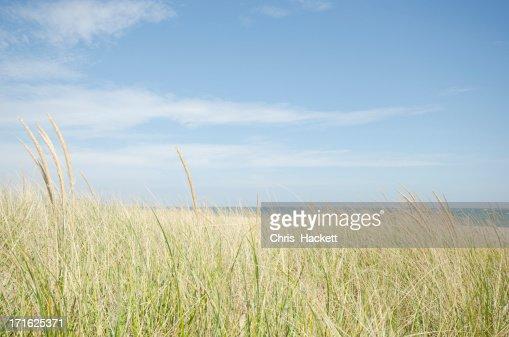 USA, Massachusetts, Nantucket, Sand dunes with grass
