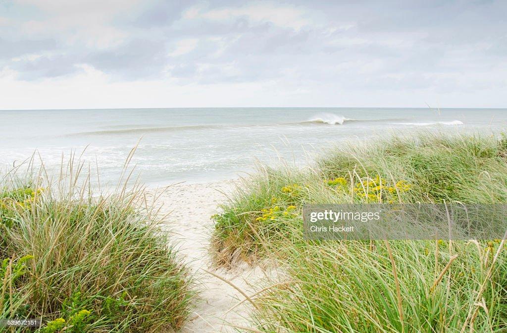 USA, Massachusetts, Nantucket, Sandy beach overgrown with marram grass