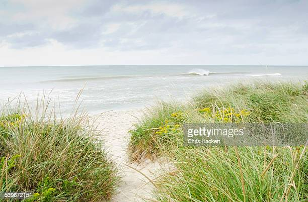 USA, Massachusetts, Nantucket, Sandy beach overgrown with marram grass