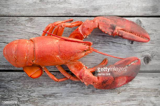 USA, Massachusetts, Plymouth, Raw lobster