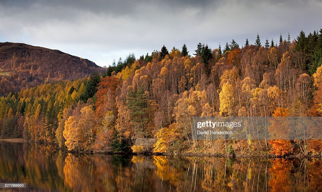 Massed fall foliage over Loch Faskally, Pitlochry, Perth and Kinross, Scotland, UK