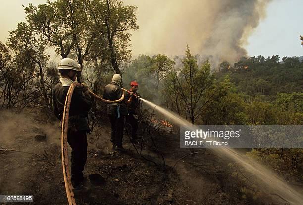 Massive Fire In The Moors Massif Le 22 août 1990 lors d'un incendie dans le massif des MAURES dans le VAR des pompiers arrosent les arbres à l'aide...
