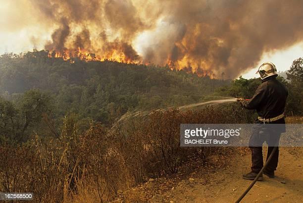 Massive Fire In The Moors Massif Le 22 août 1990 lors d'un incendie dans le massif des MAURES dans le VAR un pompier arrose des arbustes à l'aide...