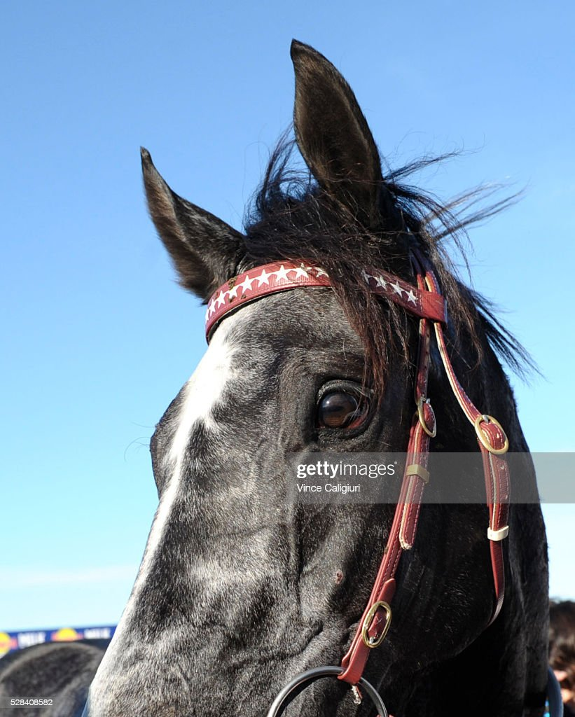 Master of Arts after winning Race 8, the Warrnambool Cup during Grand Annual Day at Warrnambool Race Club on May 5, 2016 in Warrnambool, Australia.