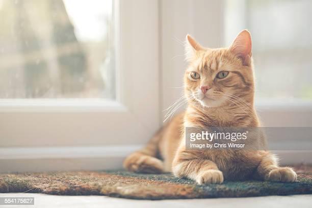 Mat cat