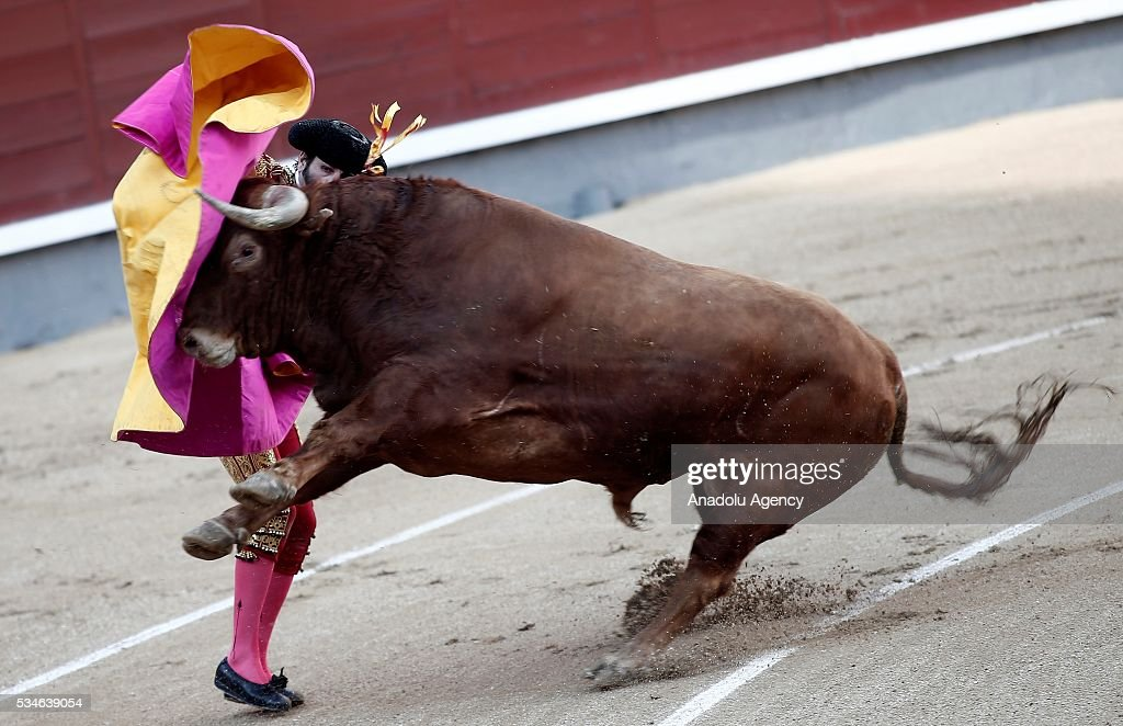 Matador Jose Garrido performs a pass to a bull during a bullfight, organized with attendance of the matadors Juan Jose Padilla and Ivan Fandino at Las Ventas bullring in Madrid, Spain on May 26, 2016.