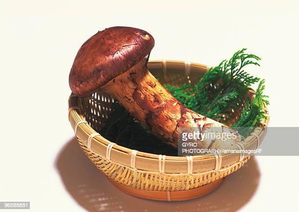 Matsutake mushroom