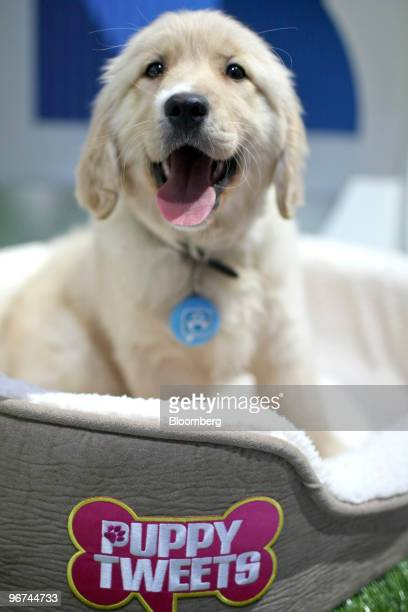 Mattel Inc's Puppy Tweets dog collar which uses motion and sound sensors to transmit prerecorded messages to a Twitter account is demonstrated at Toy...
