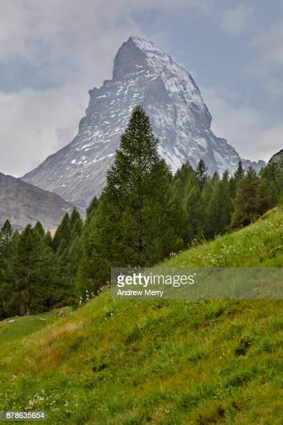 Matterhorn snow-capped with pine tree, green grass area, taken from Zermatt. A classic Swiss summer landscape.