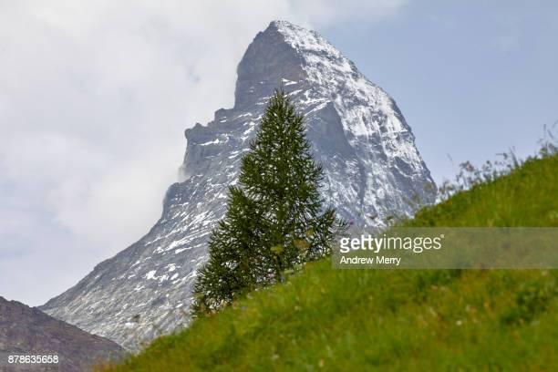 Matterhorn snow-capped with single pine tree, green grass, blue sky and clouds. Zermatt, Switzerland.