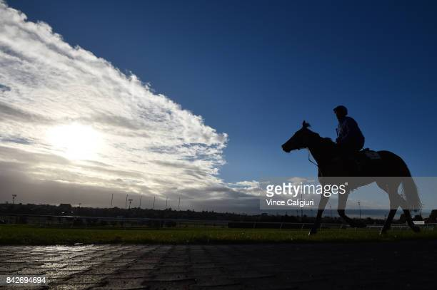 Matthew Gatt riding Etymology after a track gallop at Moonee Valley Racecourse on September 5 2017 in Melbourne Australia