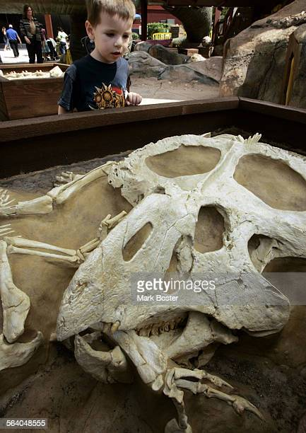 –Matthew Ross from Arizona looks at one of the interactive dinsaur fossil displays at The latest exhibit at the Discovery Science Center in Santa Ana...