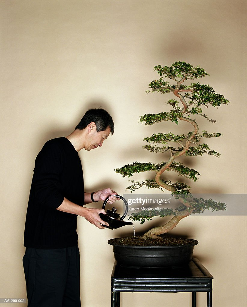 Mature Asian Man watering Azalea Bonzai : Stock Photo