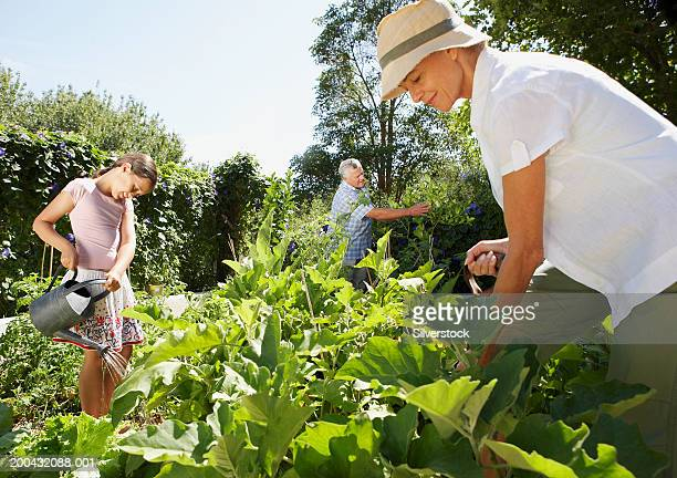 Mature couple and granddaughter (6-8) working in garden