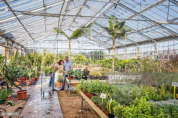 Mature couple choosing plants in a green house