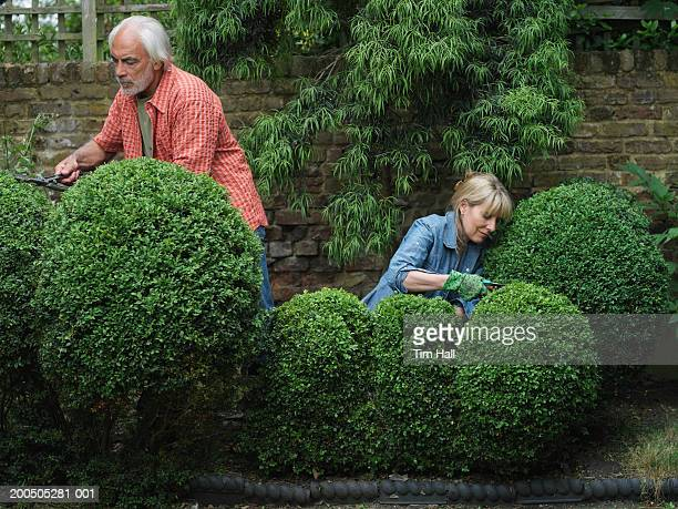 Mature couple clipping hegde in garden