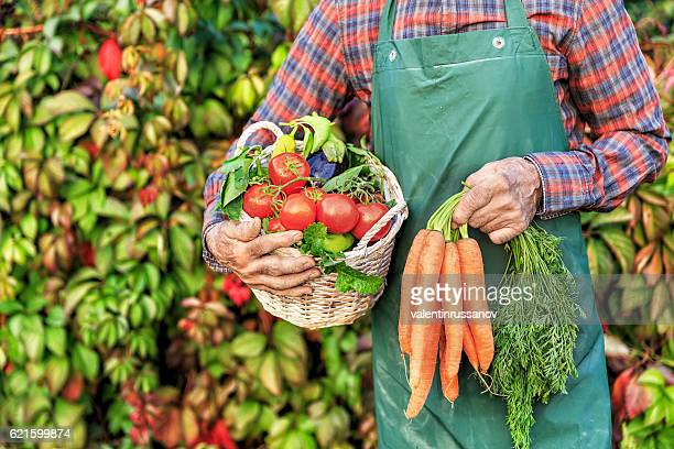 Mature farm worker carrying vegetables in basket