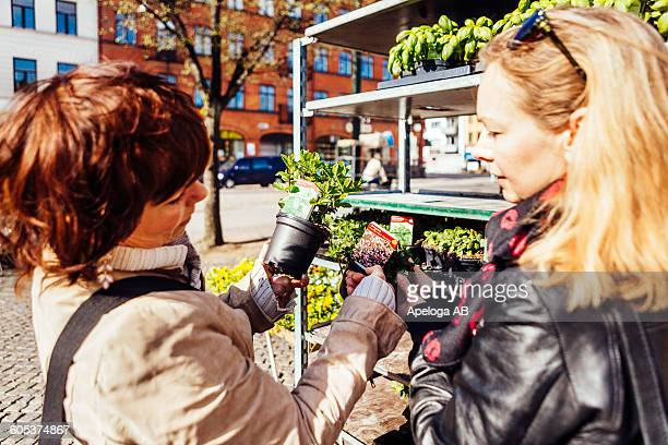 Mature female friends purchasing plants in market at town square