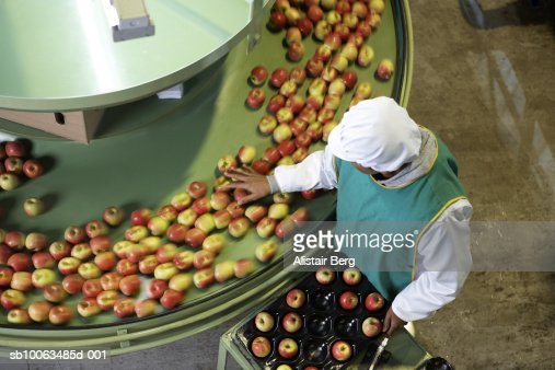 Mature female worker sorting apples in apple processing factory, elevated view