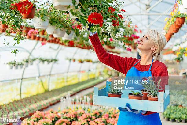 Mature florist arranging flowers in plant nursery