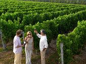 Mature friends drinking wine in vineyard, elevated view