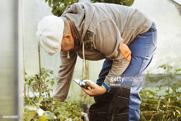 Mature gay man holding digital tablet while examining plants in greenhouse