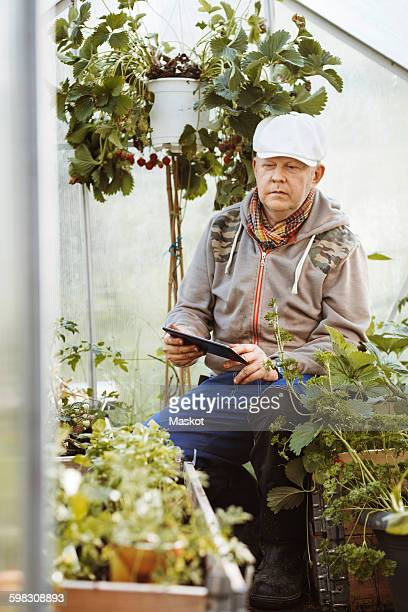 Mature gay man using digital tablet while examining plants in greenhouse
